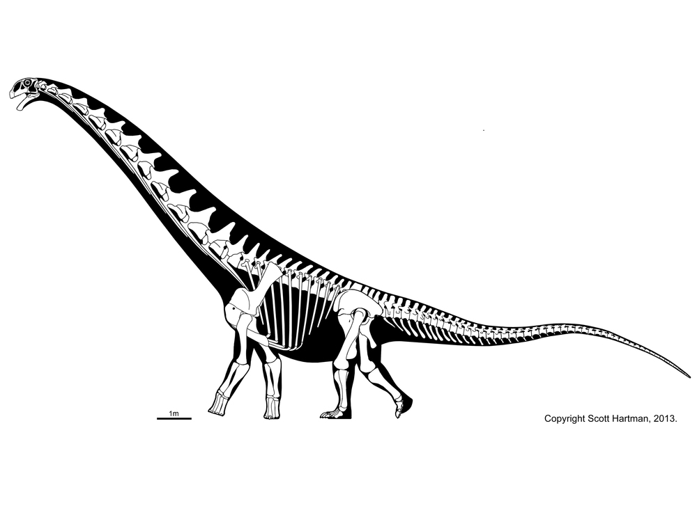 """Futalognkosaurus"" reconstruction by Scott Hartman, http://skeletaldrawings.com"